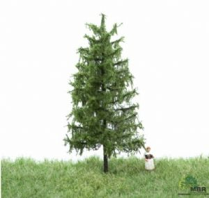 51-4103 European Larch Small